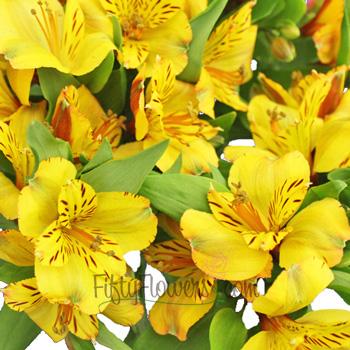 Golden Yellow Peruvian Lilies