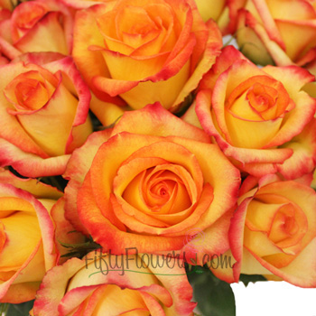 Konfetti Sunset Rose