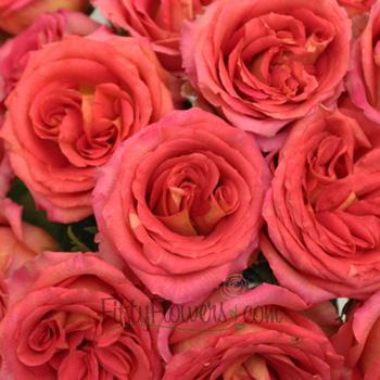 Latin Ambiance Pink Rose