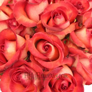 Legend Red Rose