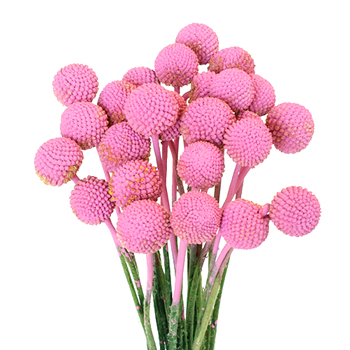 Bubble Gum Pink Bulk Billy Balls