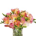 Bulk Pink Freesia Flower