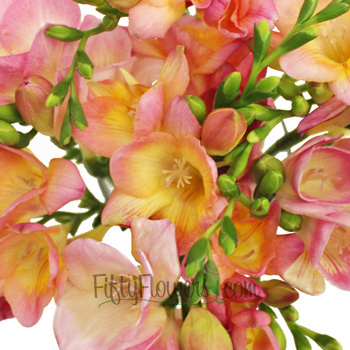 Sunset Pink Freesia Flower
