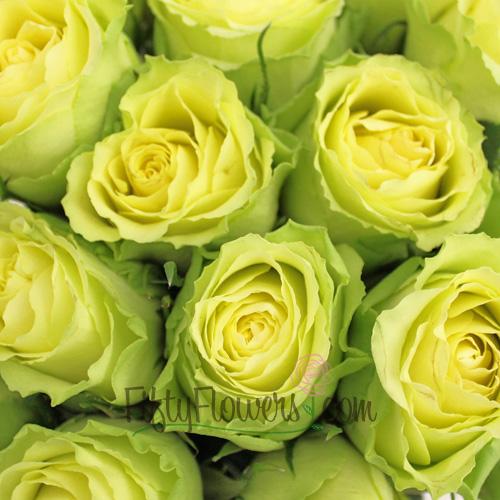 Limbo Green Yellow Rose