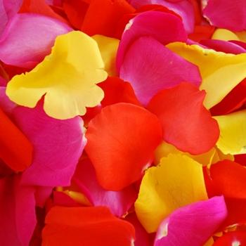 Bright Sorbet Fresh Rose Petals