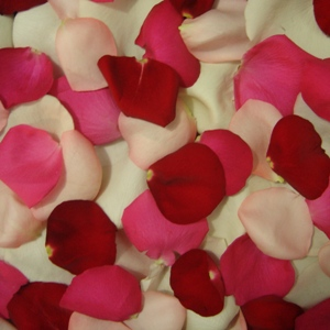 Rose Petals Love Pack