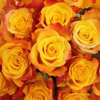 Orange Kissed Marie Claire Rose