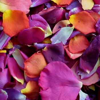 Masquerade Ball Dried Rose Petals