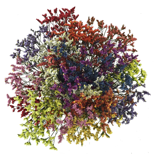 Airbrushed Mixed Limonium Flowers