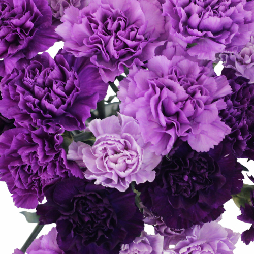 Purple Carnation Flowers Mixed
