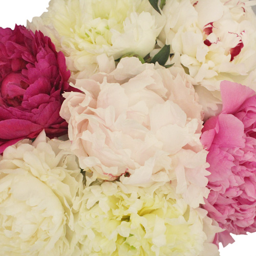 Peony Flower Mixed Color August Delivery