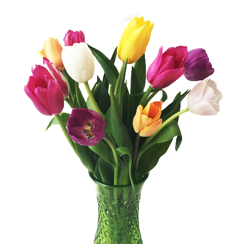 Mother's Day Fresh Cut Tulip Flowers
