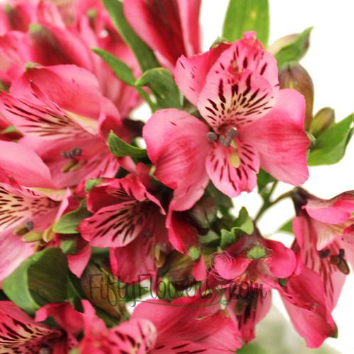 Hot Raspberry Alstroemeria Flowers