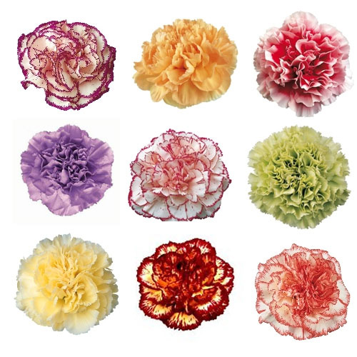 Mother's Day Mixed Color Carnation Flowers EXPRESS DELIVERY