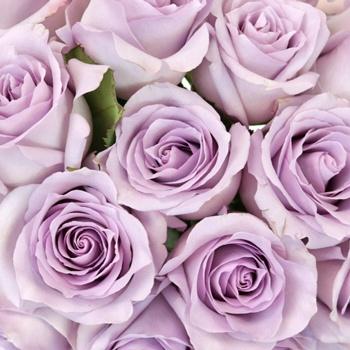 Lavender Ocean Sweetheart Roses