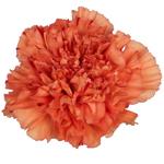 Orange Bulk Carnations flowers