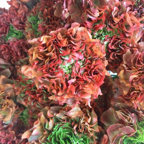 Orange and Green Pon Pon Ranunculus
