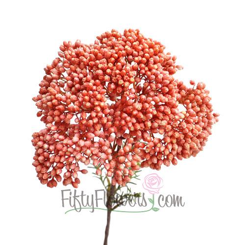 Orange Tinted Rice Flower