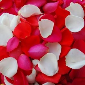 Orange Pinksicle Rose Petals