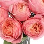 Garden Rose Honore de Balzac White and Pink Flower