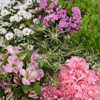 Pink Textured Filler Flower Pack