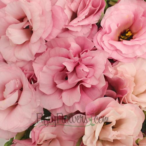 Light Pink Designer Lisianthus Flower for June to September Delivery