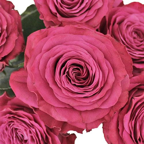 Precious Moments Garden Rose
