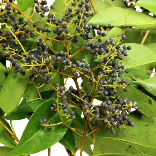 Privett Berries Wholesale Fall Greens