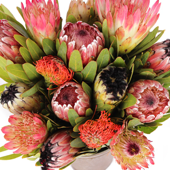 Farm Assorted Protea Variety Pack
