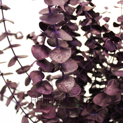 Purple Tinted Baby Eucalyptus