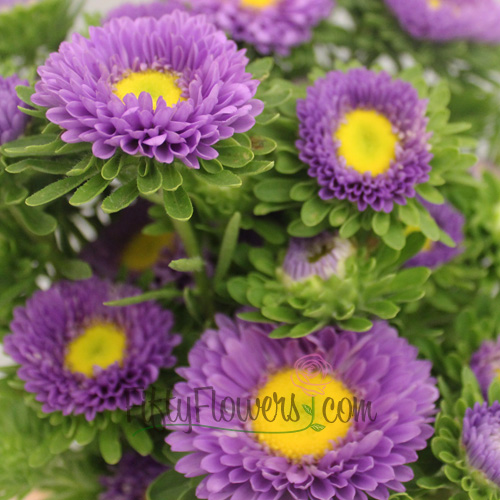 Lavender Matsumoto Flowers