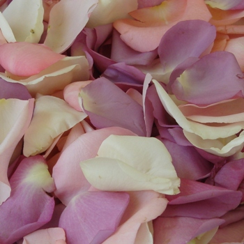 Purple Pinksicle Fresh Rose Petals