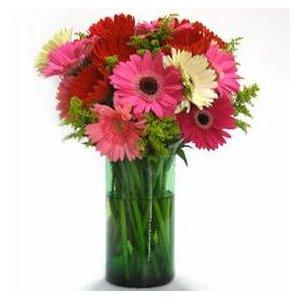 Gerbera Daisy Valentine's Day Arrangement