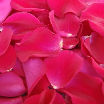 Raspberry Pink Bulk Rose Petals