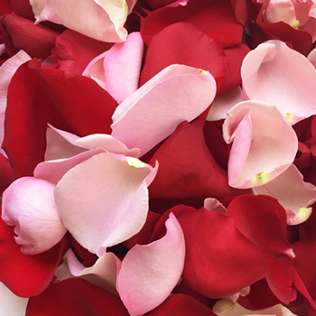 Red and Pink Rose Petals