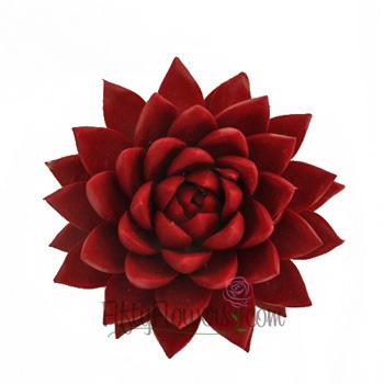 Lipstick Red Enhanced Succulent Flower