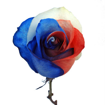 Patriotic Rainbow Roses Red, White and Blue