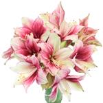 Bulk Amaryllis Red Flower