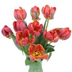 Roccoco Novelty Tulip Flower