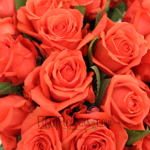 Rock Star Orange Rose