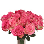 Light Pink Rose Rossini