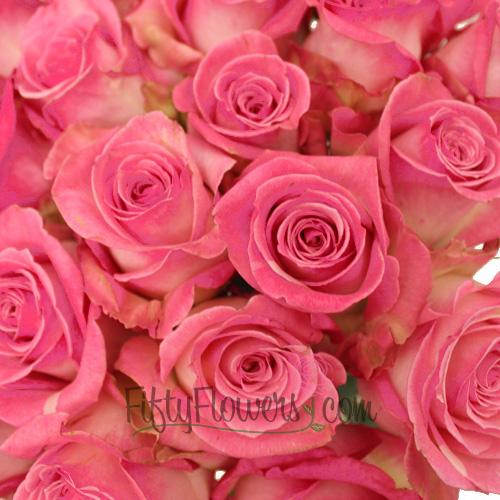 Frosted Pink Rossini Rose