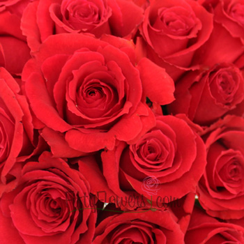 Rouge Baizer Red Rose