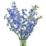 Light_Blue_Delphinium_Flowers