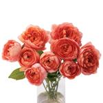 bulk bicolor yellow orange red spray roses