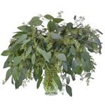 Seeded Eucalyptus Greenery Fresh