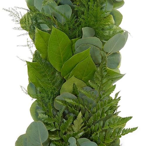 Silver Dollar, Leather Leaf, Plumosa and Salal Greens Garland