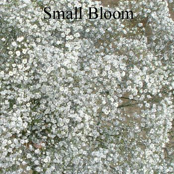 Silver Glitter Airbrushed Baby's Breath