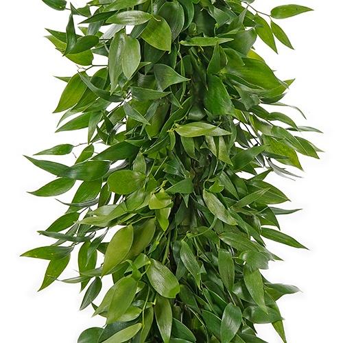 Italian Ruscus Greens Garland