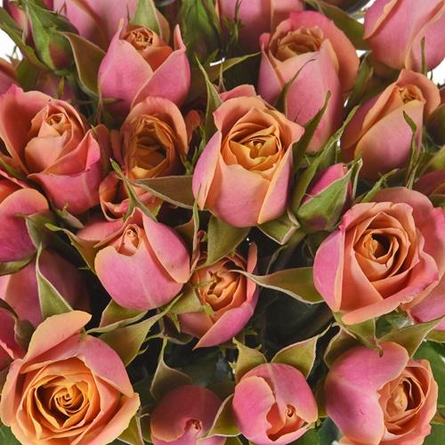 Golden Peach Ruffles Petite Roses